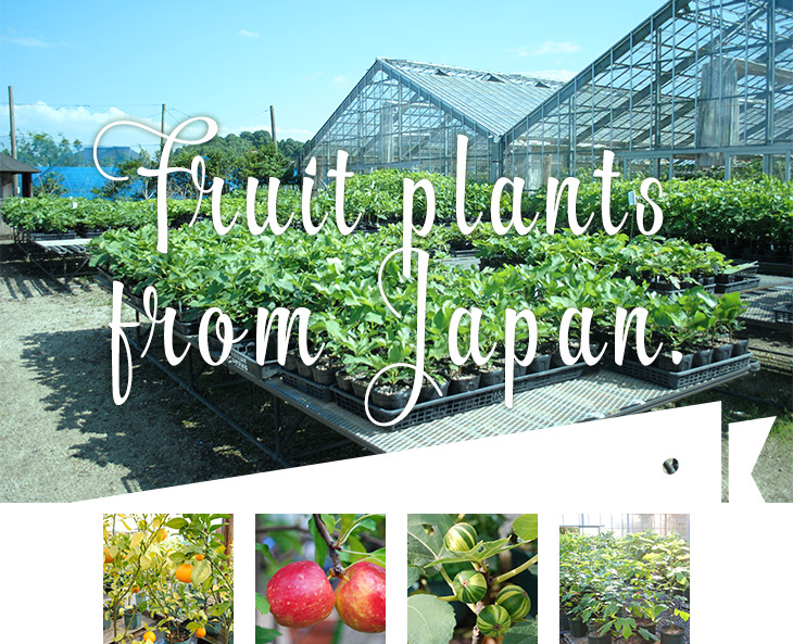 Fruit plants from Japan.